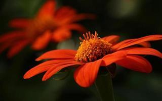 vacker orange blomma