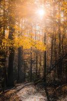 träd på dagtid foto