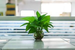 växter i vaser på bordet
