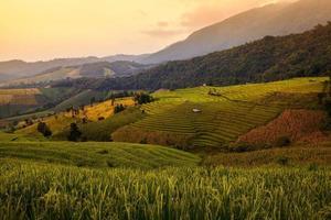koja i grönt terrasserat risfält under solnedgången vid Chiangmai
