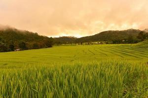 risfältfält på terrasserade kullar foto