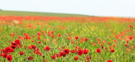 vackra lantliga fält på sommaren