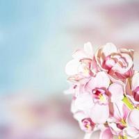 orkidéer foto
