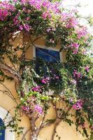 blomma hus foto