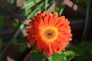 natura. färgad blomma