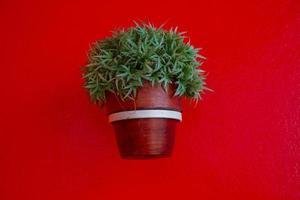grönt gräs i blomkruka på den röda väggen foto
