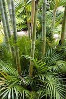 bambu trädgård foto