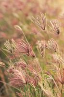 gräs i vinden
