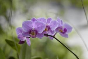 bukett med lila orkidéer
