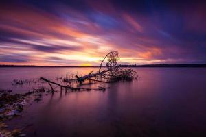 träd fallit in i sjön foto