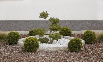 liten trädgård foto