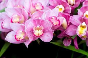 vackra orkidéblommor.
