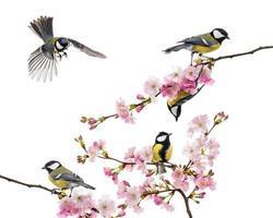 grupp av tit som sitta på en blommande gren