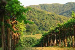 dalen vingårdar