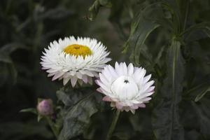 papper blommor foto