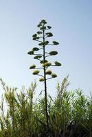 végétation, arbuste foto