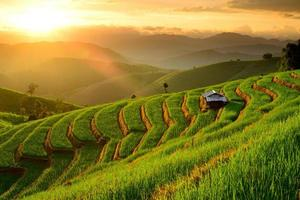 risterrasser med solnedgångsbakgrund vid ban papongpieng chiangmai foto