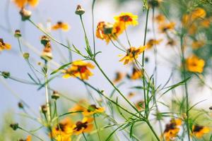 blommor mot blå himmel
