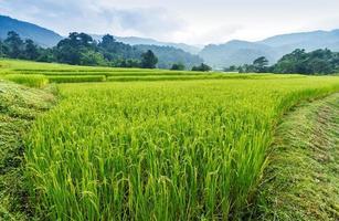 grönt terrasserat risfält foto