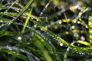 fallande regndroppar på ett grönt gräs på morgonen