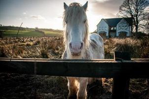 vit häst utanför övergiven hus