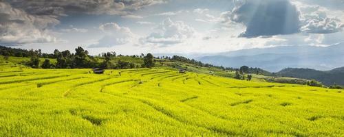 risfält i steg foto