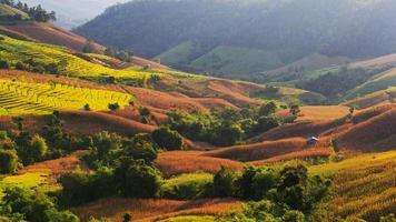 terrasserad risfält i mae-jam-byn foto