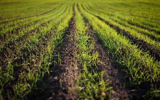 grönt fält med planteringar foto