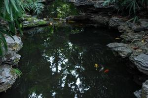 guldfisk i dammen i en kinesisk trädgård foto