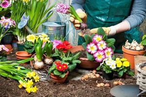 blomsterträdgård