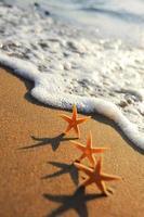 havsstjärnor