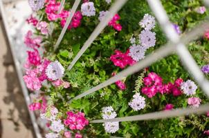 vild liten blomma foto