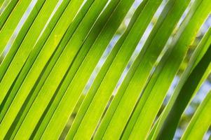 bakgrund av palmblad på nära håll