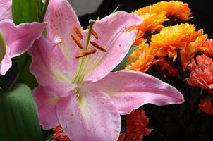 makro av rosa lilja foto