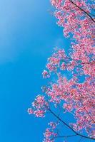 vacker rosa blomma blomning foto