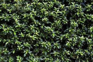vacker bakgrund grön lämnar väggen under sommarsäsongen foto
