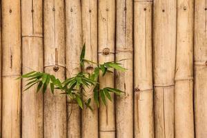 bambubakgrund. foto