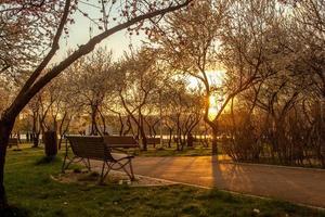 blommande träd på våren på landsbygden äng vid solnedgången