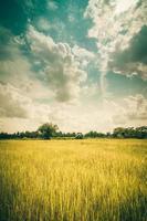 grönt gräsris och himmel
