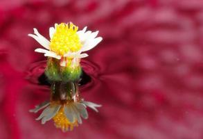 vit blomma som reflekterar i vatten