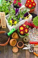 trädgårdsredskap och blommor foto