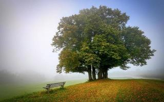 träd på sluttande mark på hösten