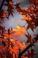 rostade löv i ett träd