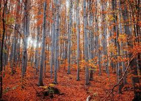 höga träd i en skog på hösten