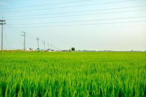 landskap av det gröna fältet i lugnt ögonblick