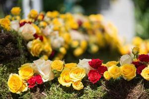 rosernas skönhet foto