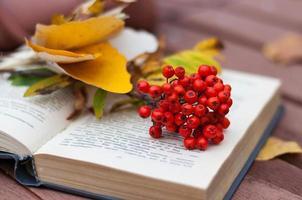 bok med ashberry på bänken foto