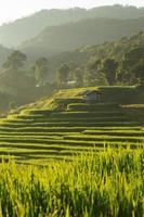 risfält av jordbruksplantagen, Chiangmai, Thailand foto