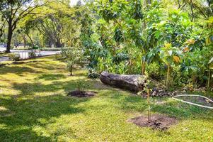 natur trädgård