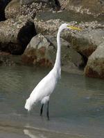 vit fågel foto